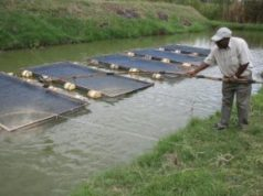 Feasibility-Study-On-Fish-Farming-Business-In-Nigeria