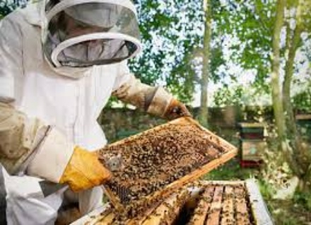 bee-farming-in-nigeria