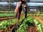 organic-farming-in-nigeria