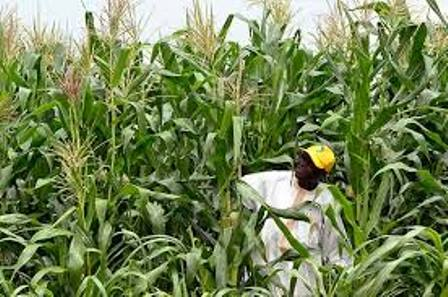 agricultural crops in nigeria