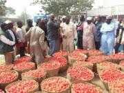 tomato-farming-in-nigeria