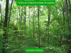 names of forests in nigeria
